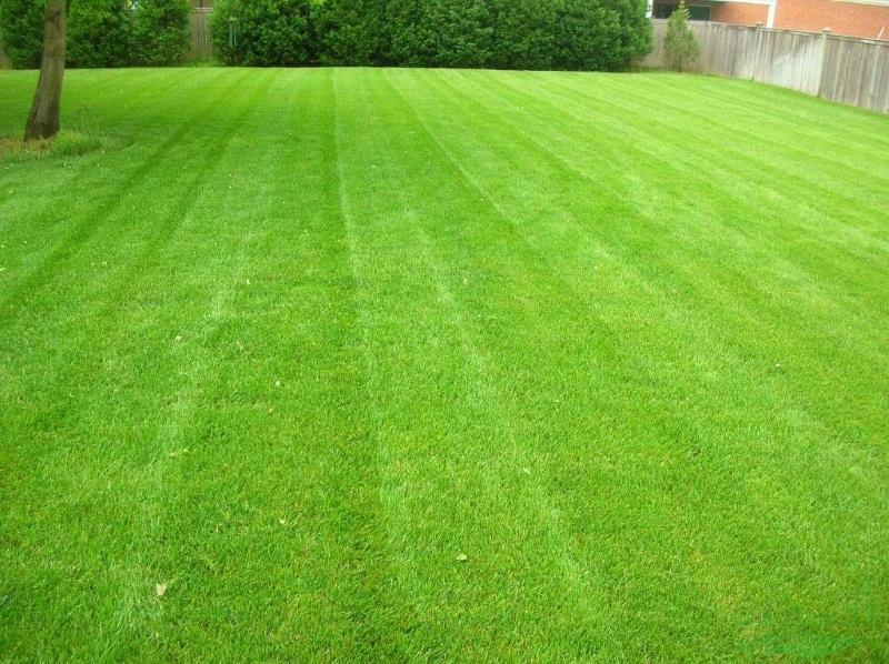 Посев газона цена работ