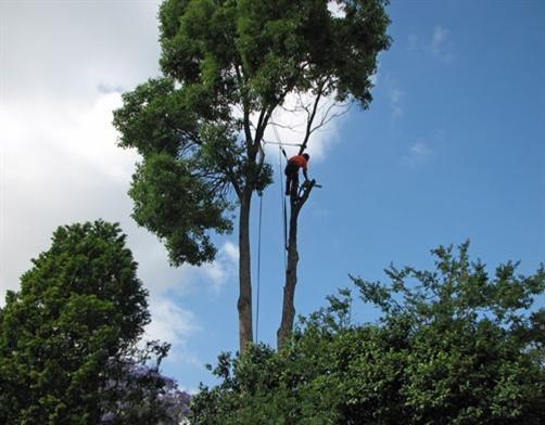 Вырубка деревьев на участке от «уДачников»