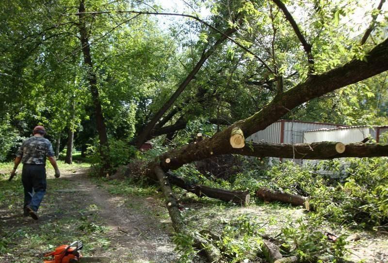 Спил аварийных деревьев