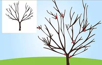 Обрезка плодовых деревьев весной.