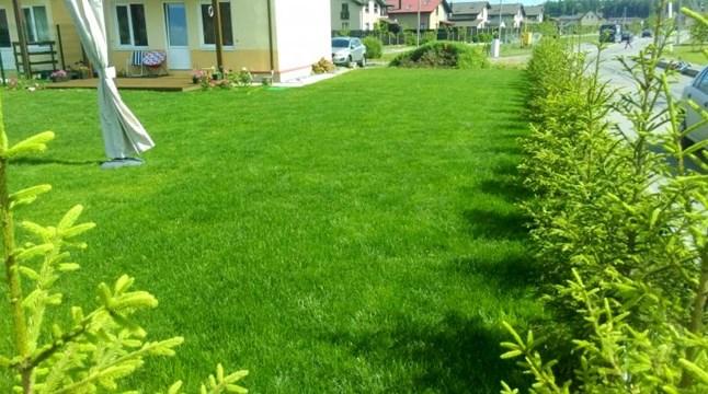 Декоративный посевной газон под ключ