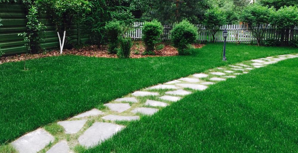 Устройство газона — задача для профи