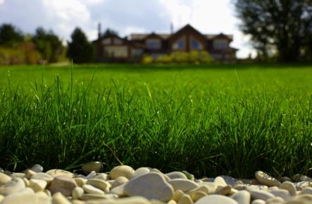 Устройство газона — задача для профи!