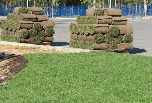 Важные нюансы при укладке рулонного газона