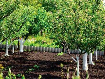 Особенности обрезки садовых деревьев и кустарников