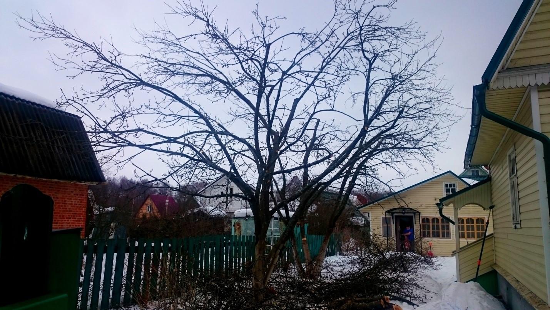 Снижение кроны и санитарная обрезка яблони в Чеховском районе